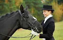 elevage de chevaux 06
