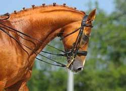 pensions pour chevaux alpes maritimes