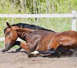 travail monte pour chevaux cannes