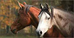 cours particuliers pour cheval nice